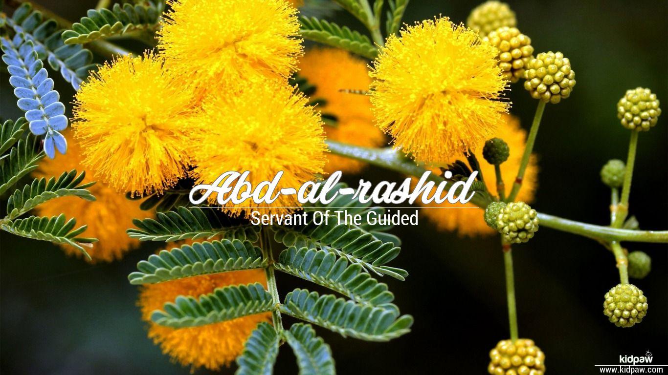 Abd-al-rashid beautiful wallper