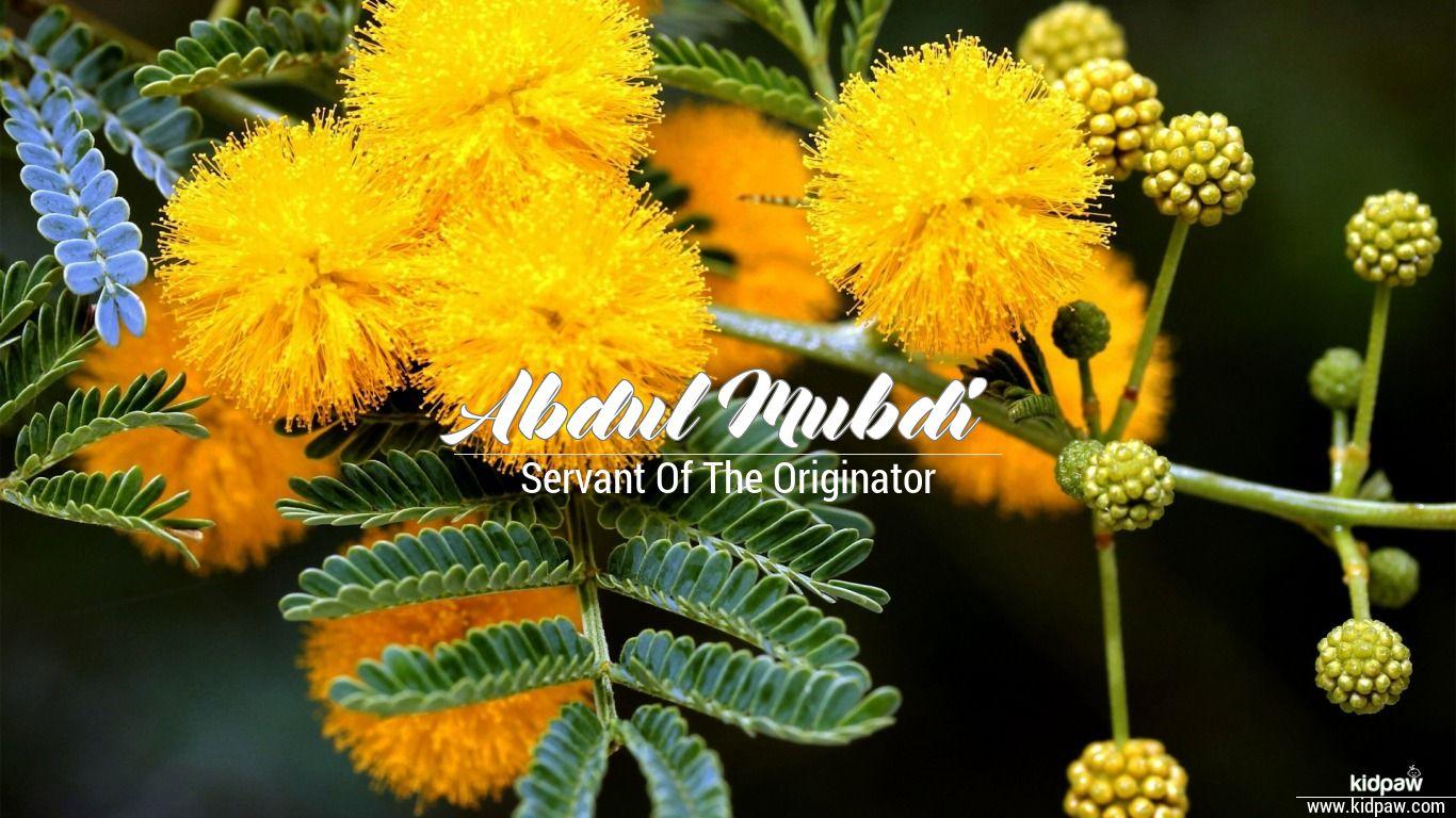 Abdul mubdi beautiful wallper