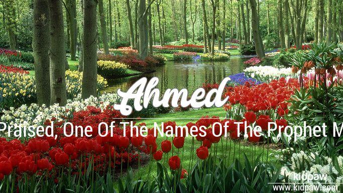 Ahmed beautiful wallper