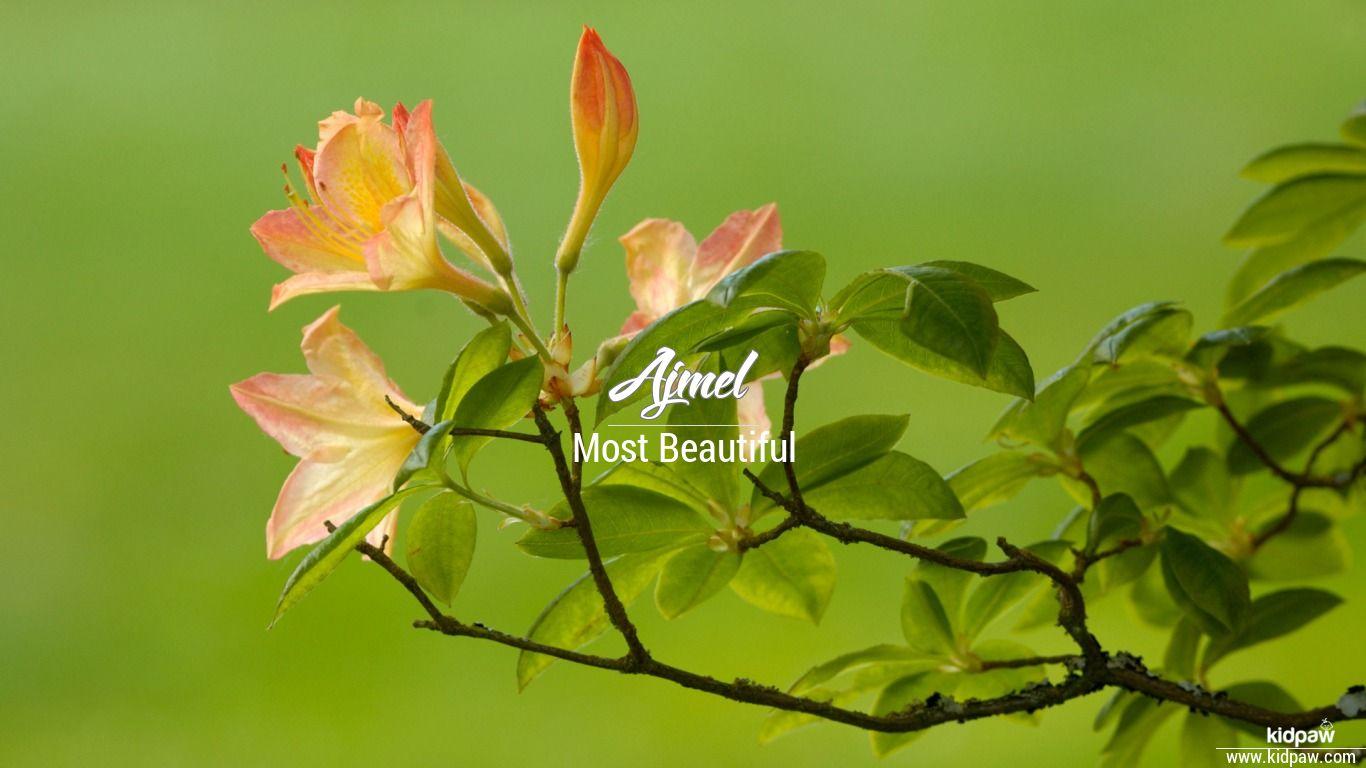 Ajmel beautiful wallper