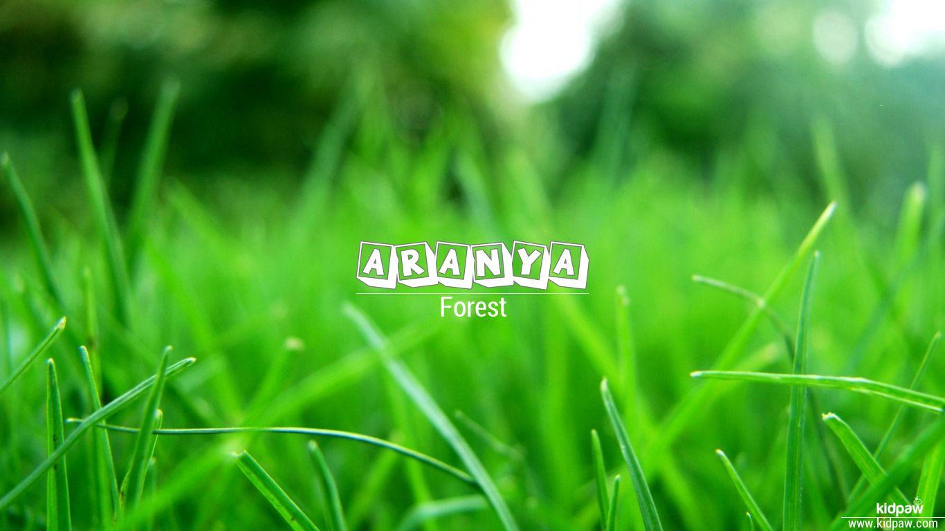 Aranya Hindi meaning