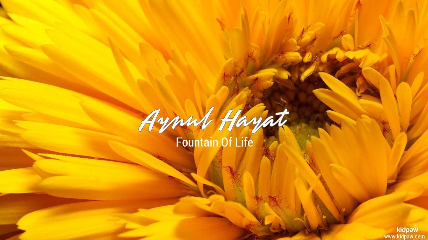 Aynul hayat beautiful wallper