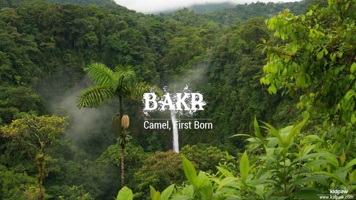 Bakr beautiful wallper