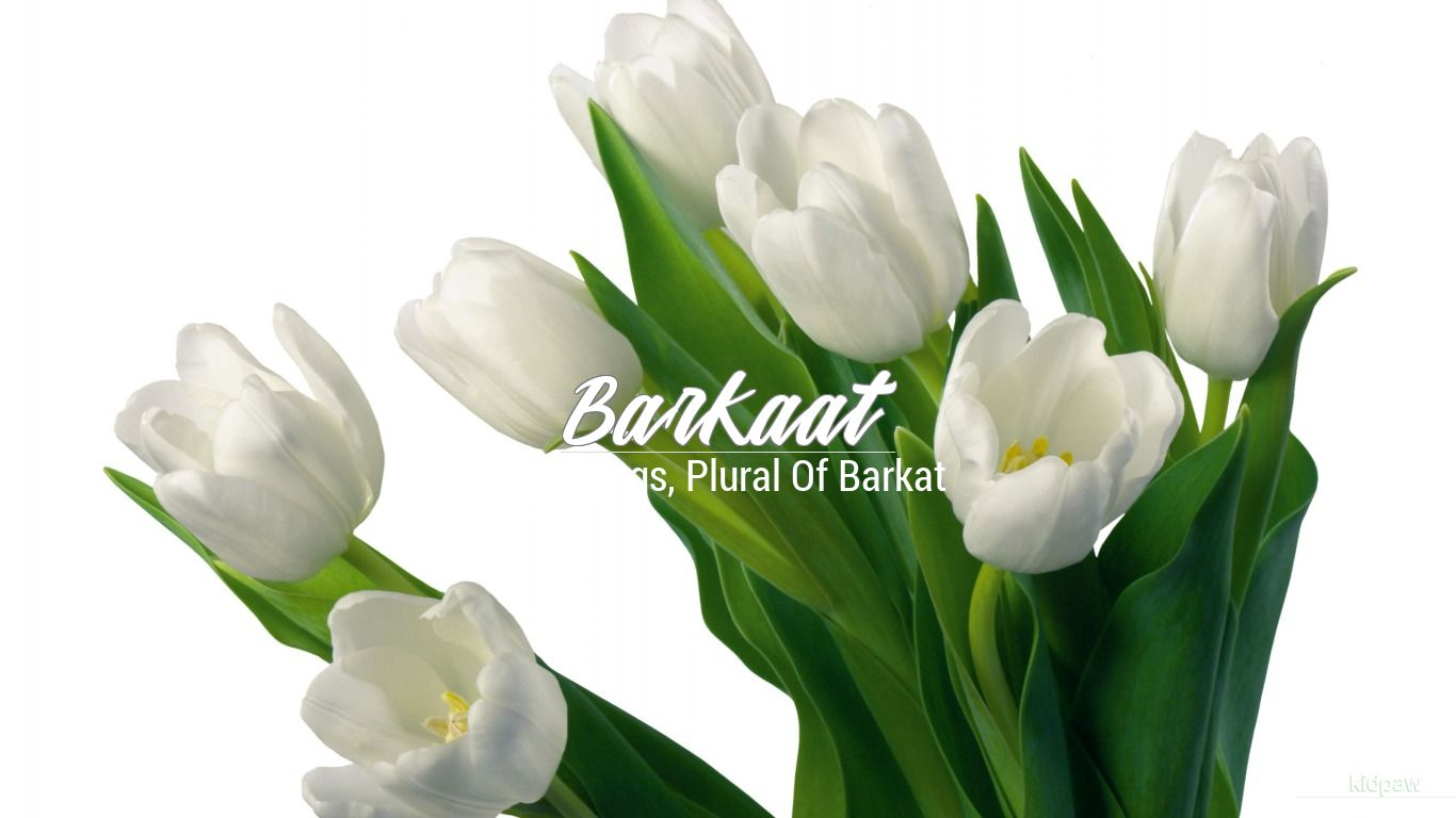 Barkaat beautiful wallper