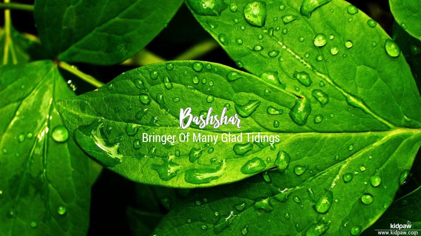Bashshar beautiful wallper