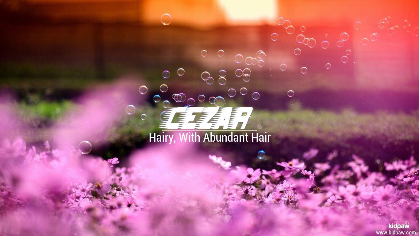 Cezar beautiful wallper