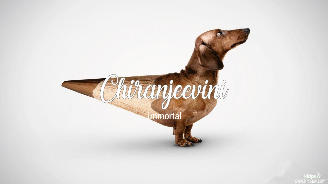 Chiranjeevini beautiful wallper