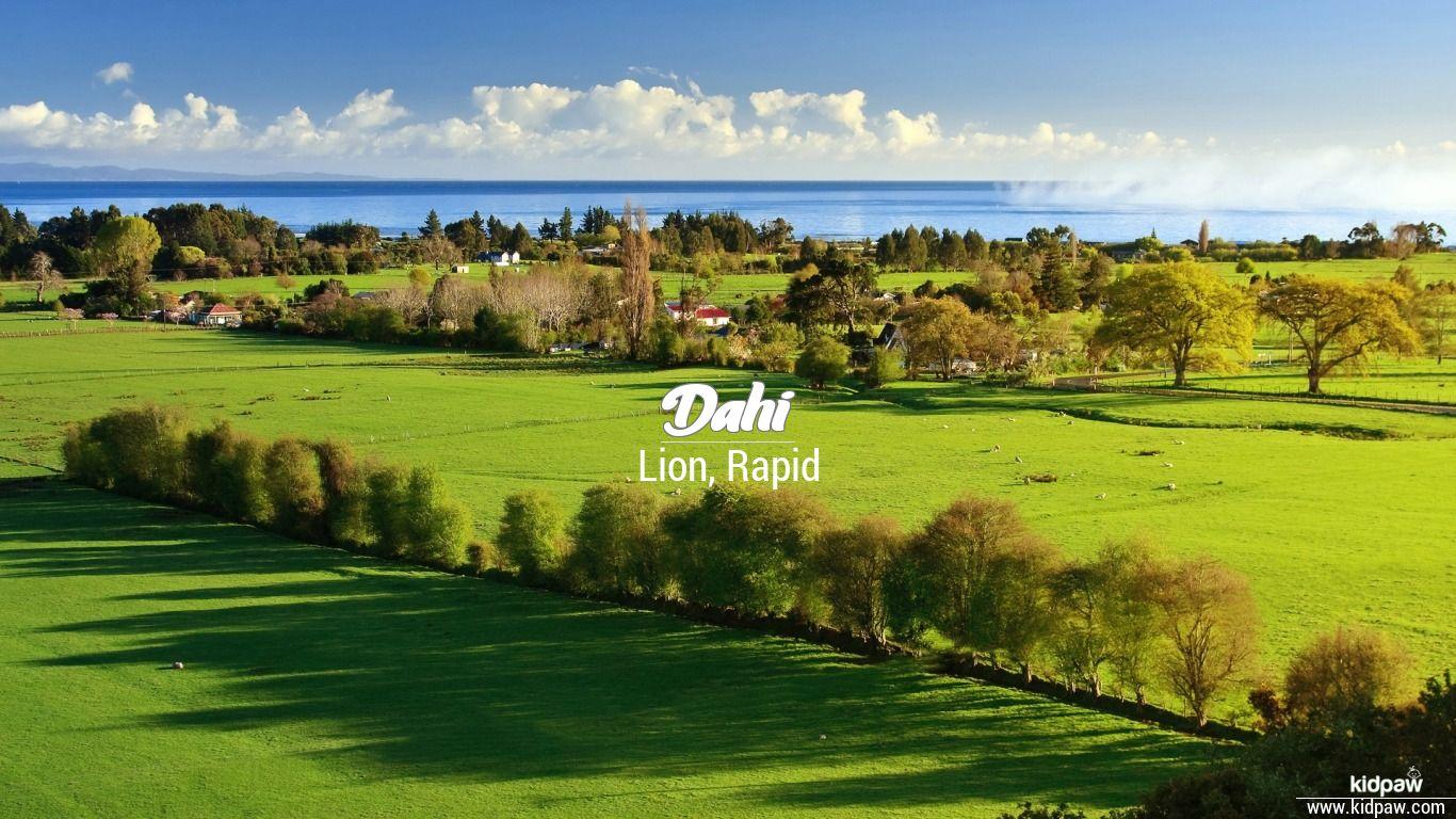 Dahi beautiful wallper