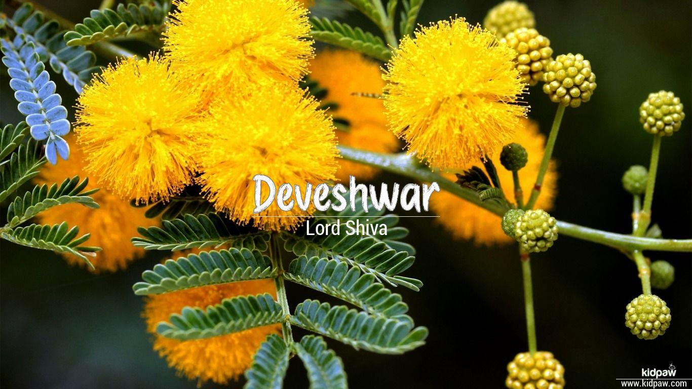 Deveshwar beautiful wallper
