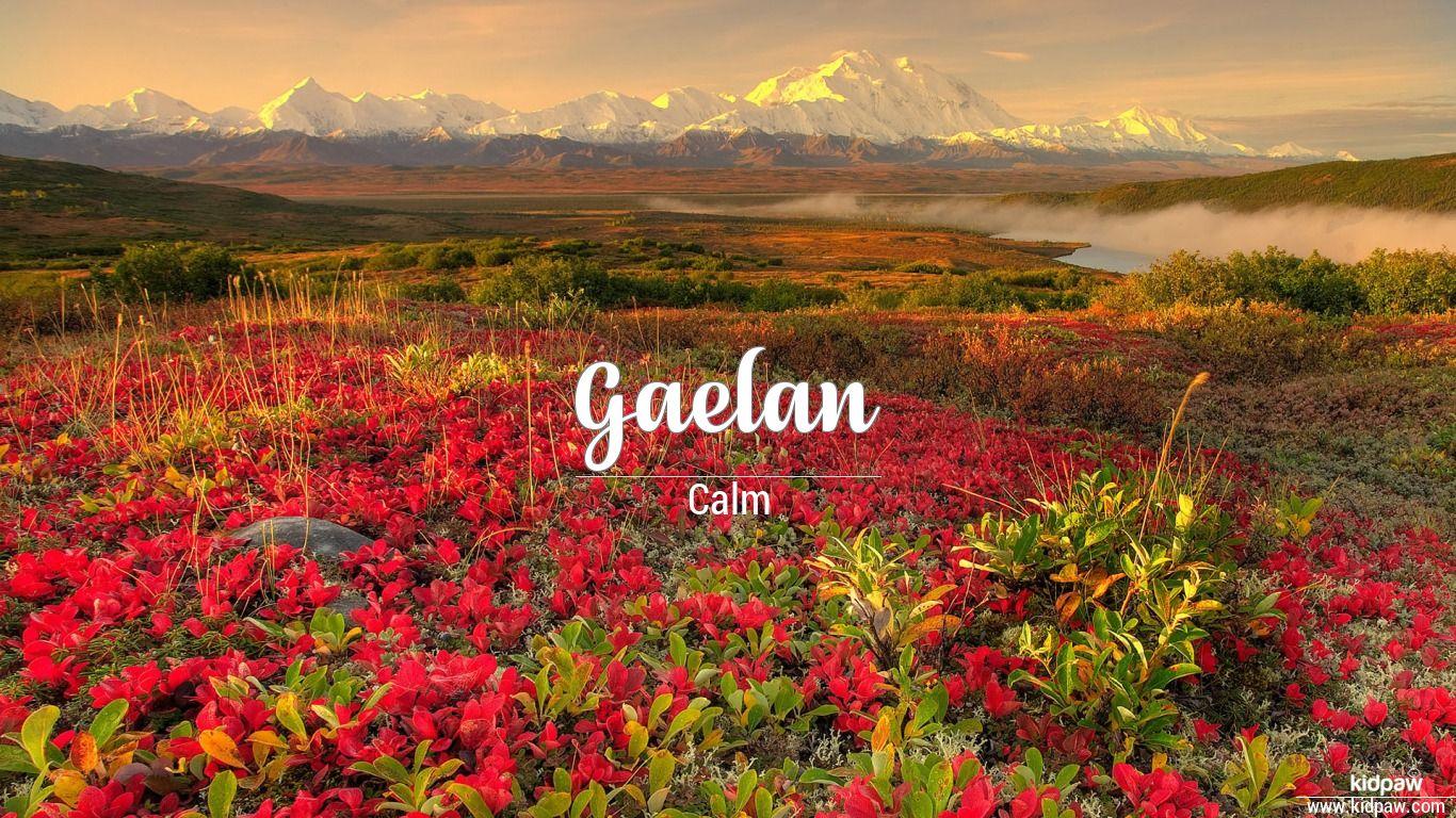 Gaelan beautiful wallper