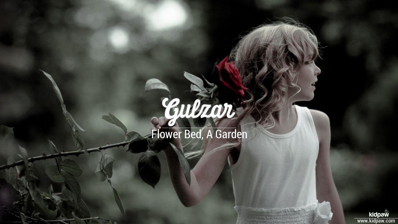 Gulzar beautiful wallper