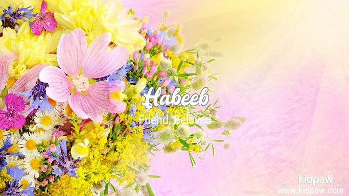حبیب | Habeeb Name Meaning in Urdu, Arabic names for Boys