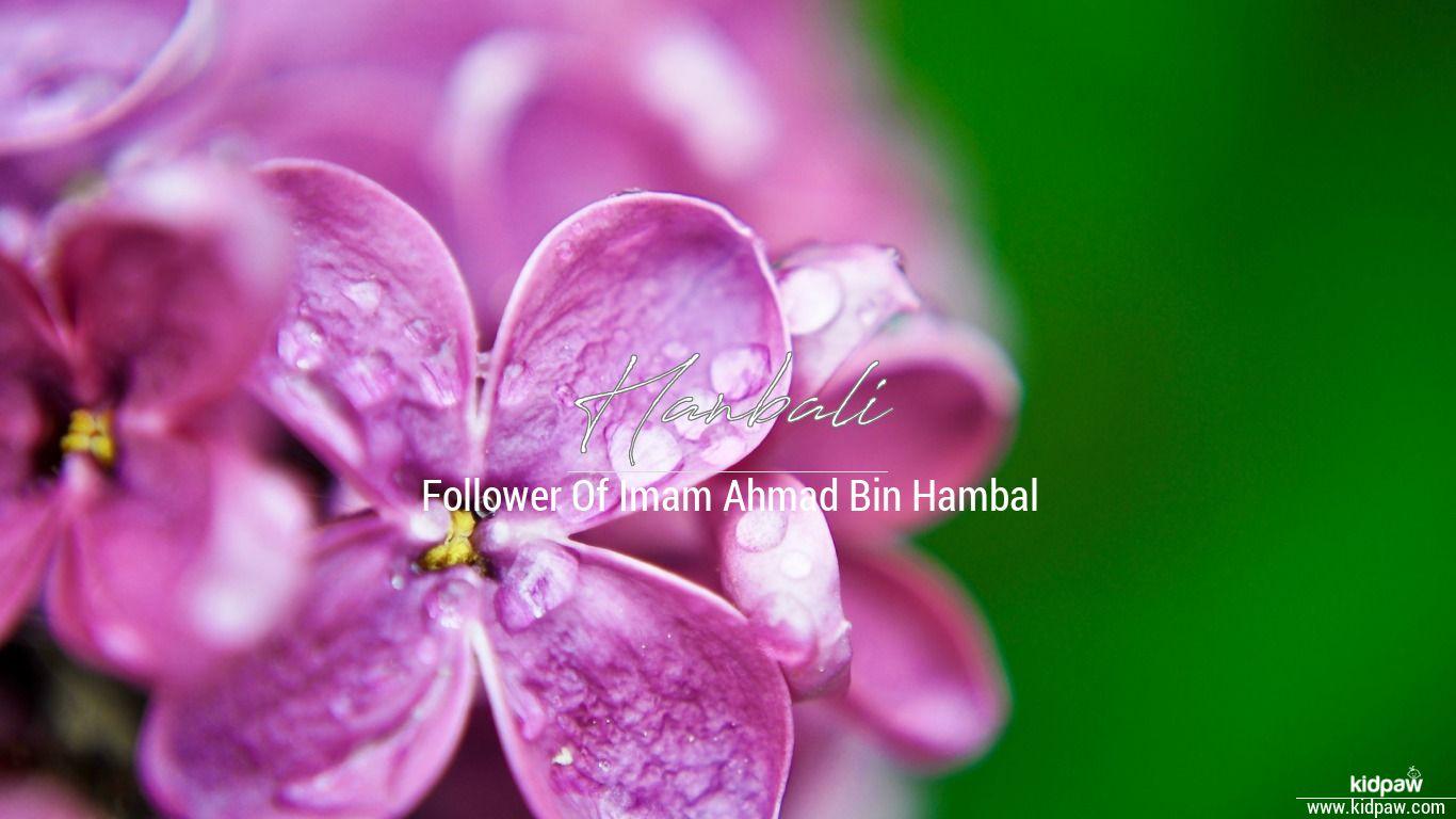 Hanbali beautiful wallper