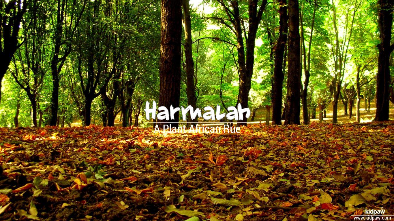 Harmalah beautiful wallper