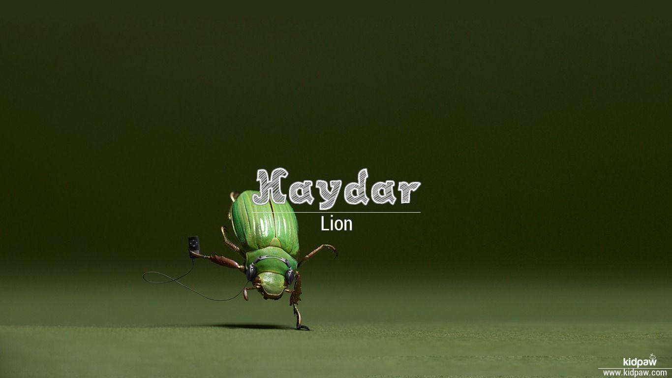 Haydar beautiful wallper
