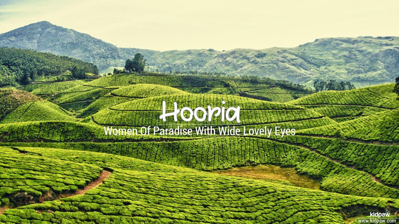 Hooria beautiful wallper