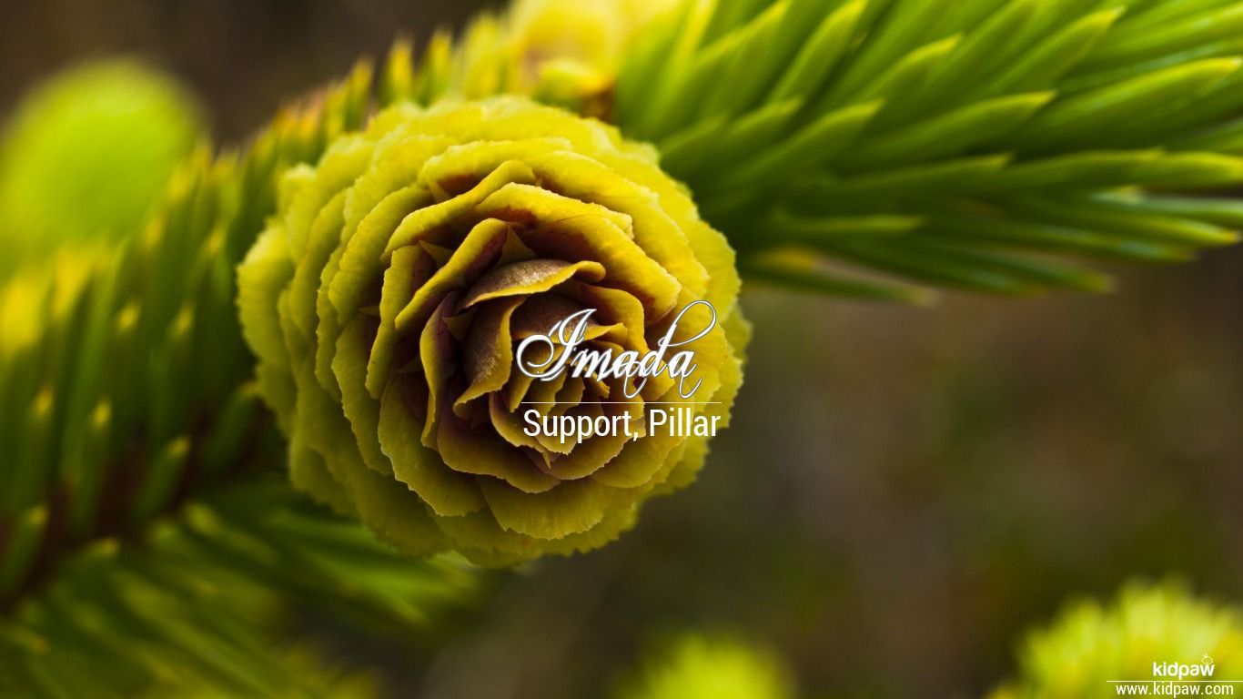 Imada beautiful wallper