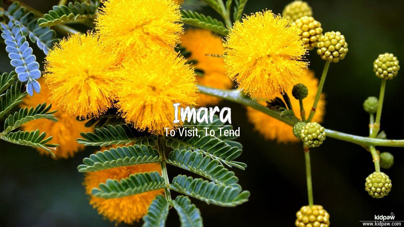 Imara beautiful wallper