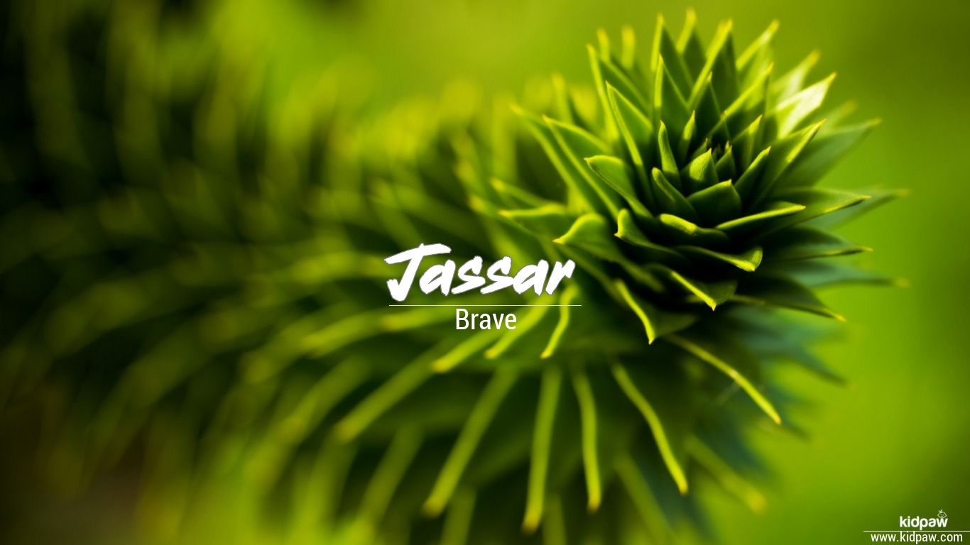 Jassar beautiful wallper