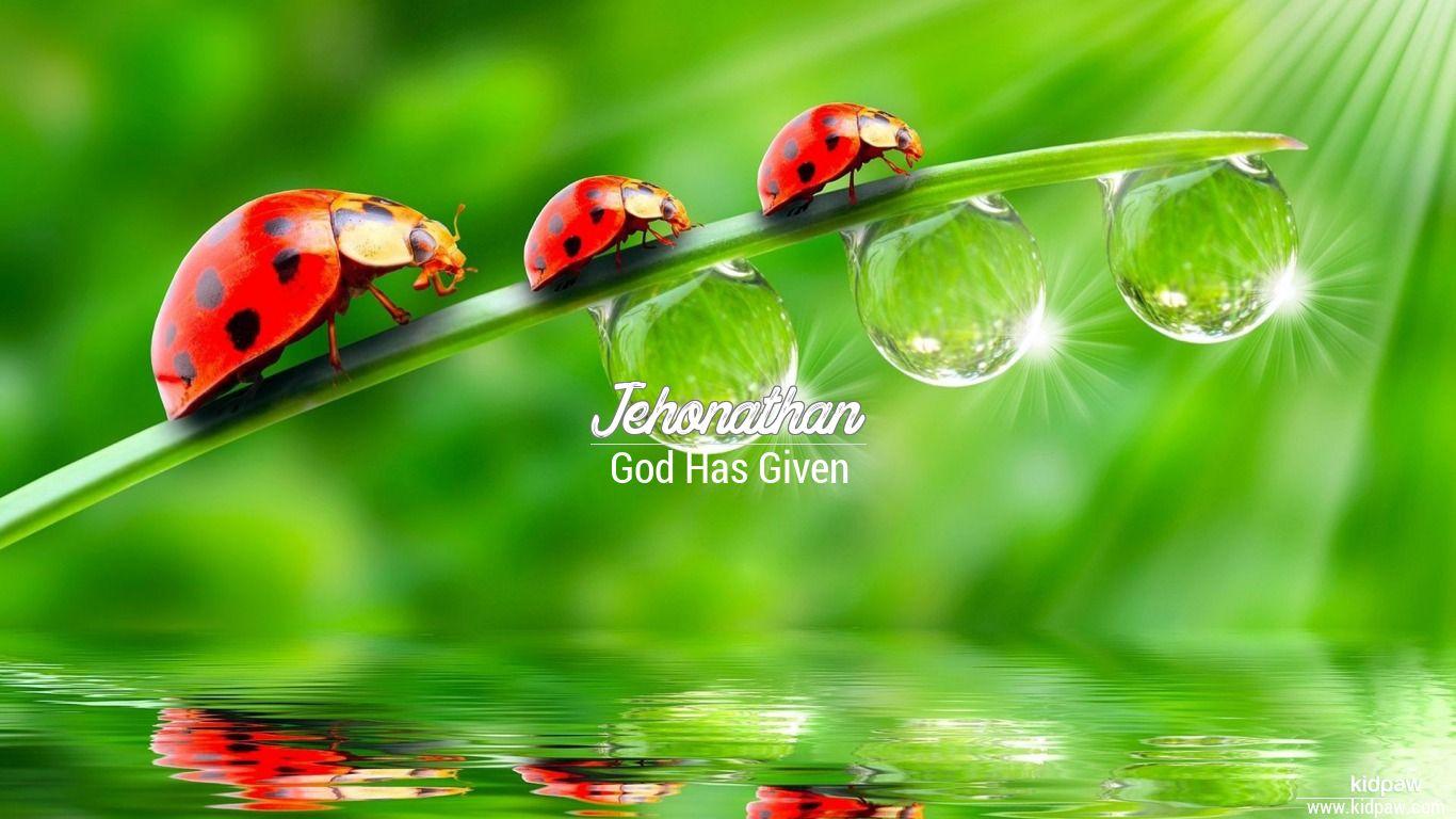 Jehonathan beautiful wallper