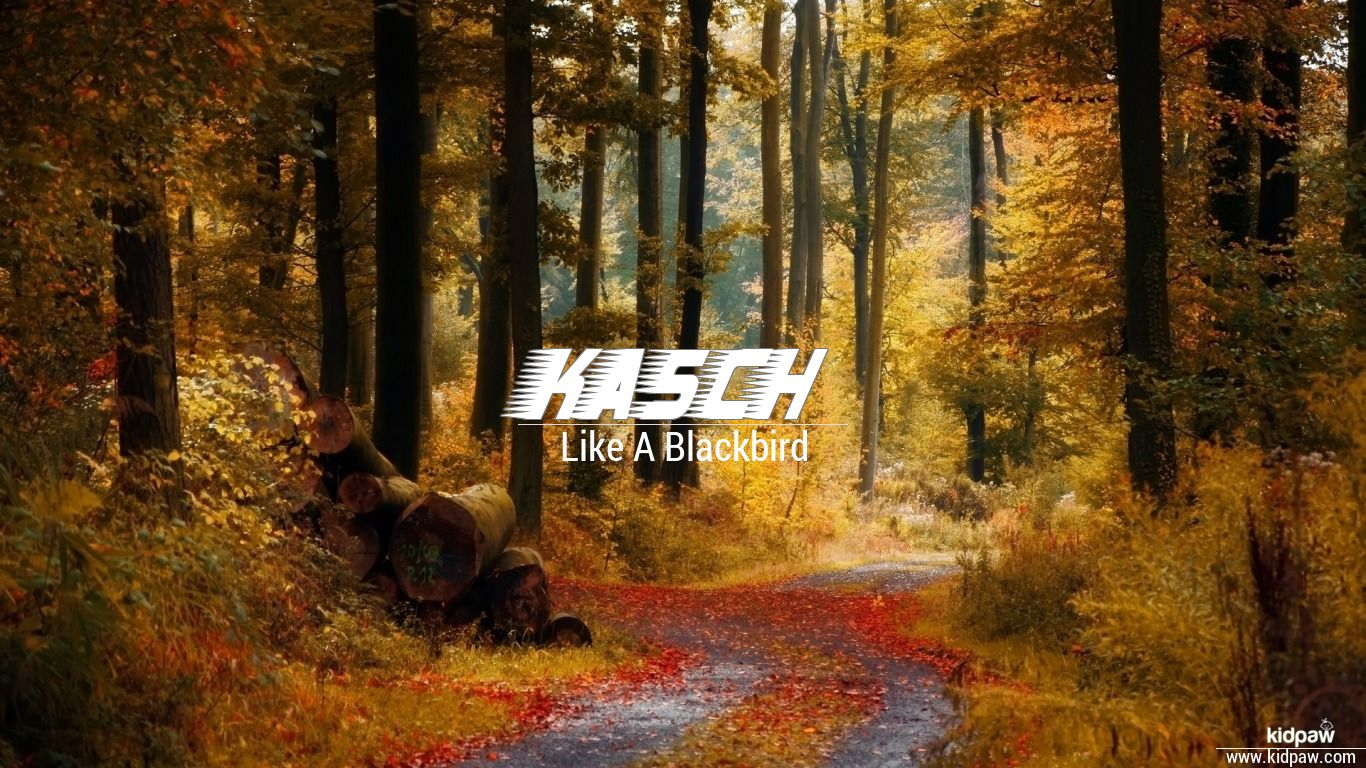 Kasch beautiful wallper