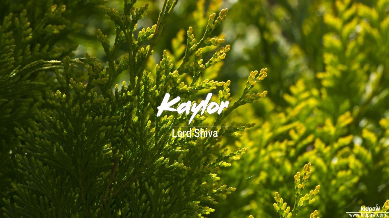 Kaylor beautiful wallper