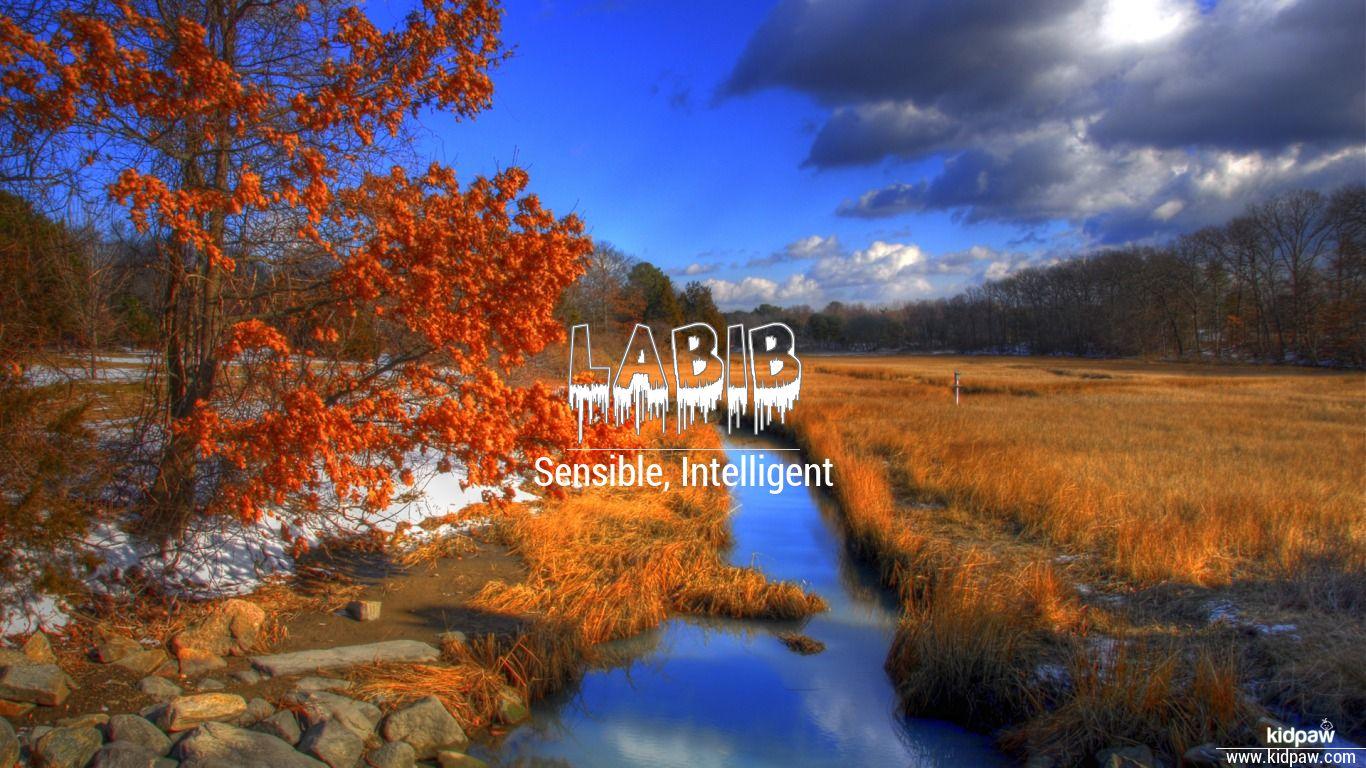 Labib beautiful wallper