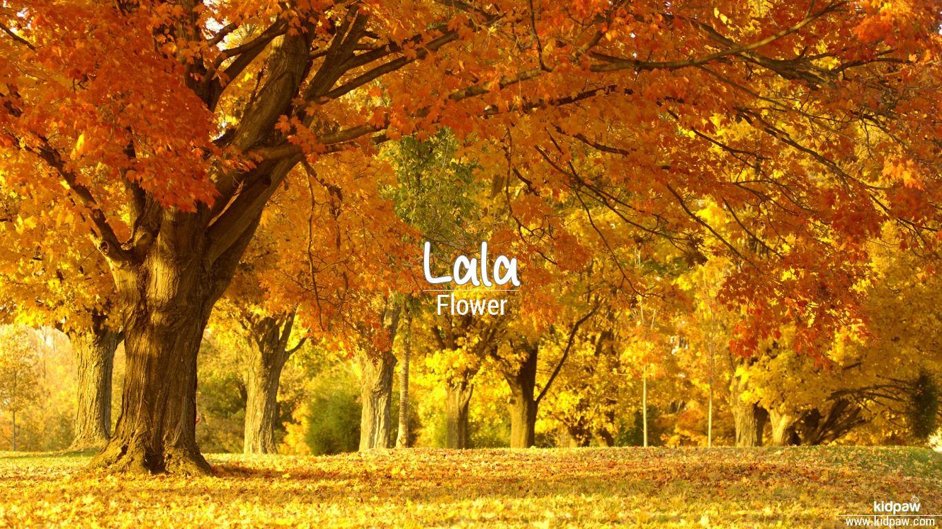 Lala beautiful wallper