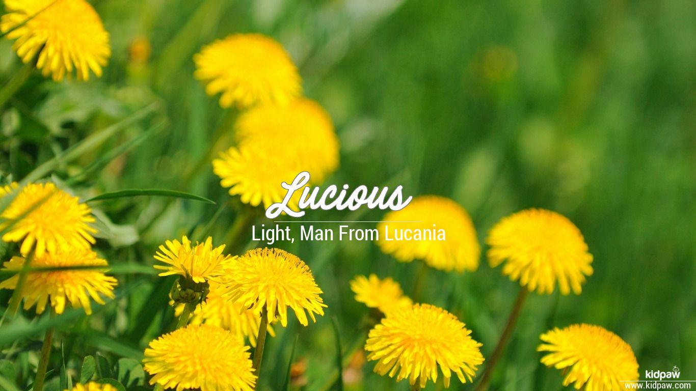 Lucious beautiful wallper