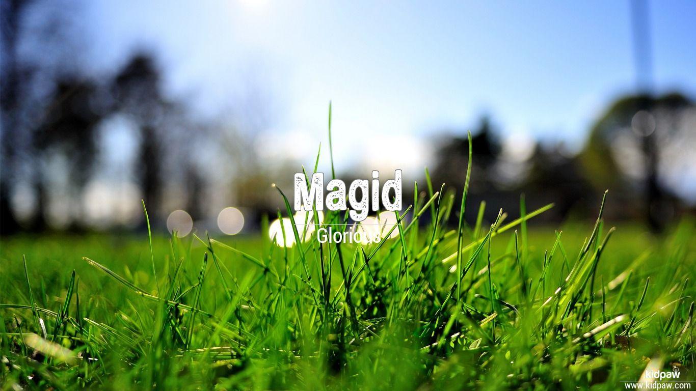 Magid beautiful wallper