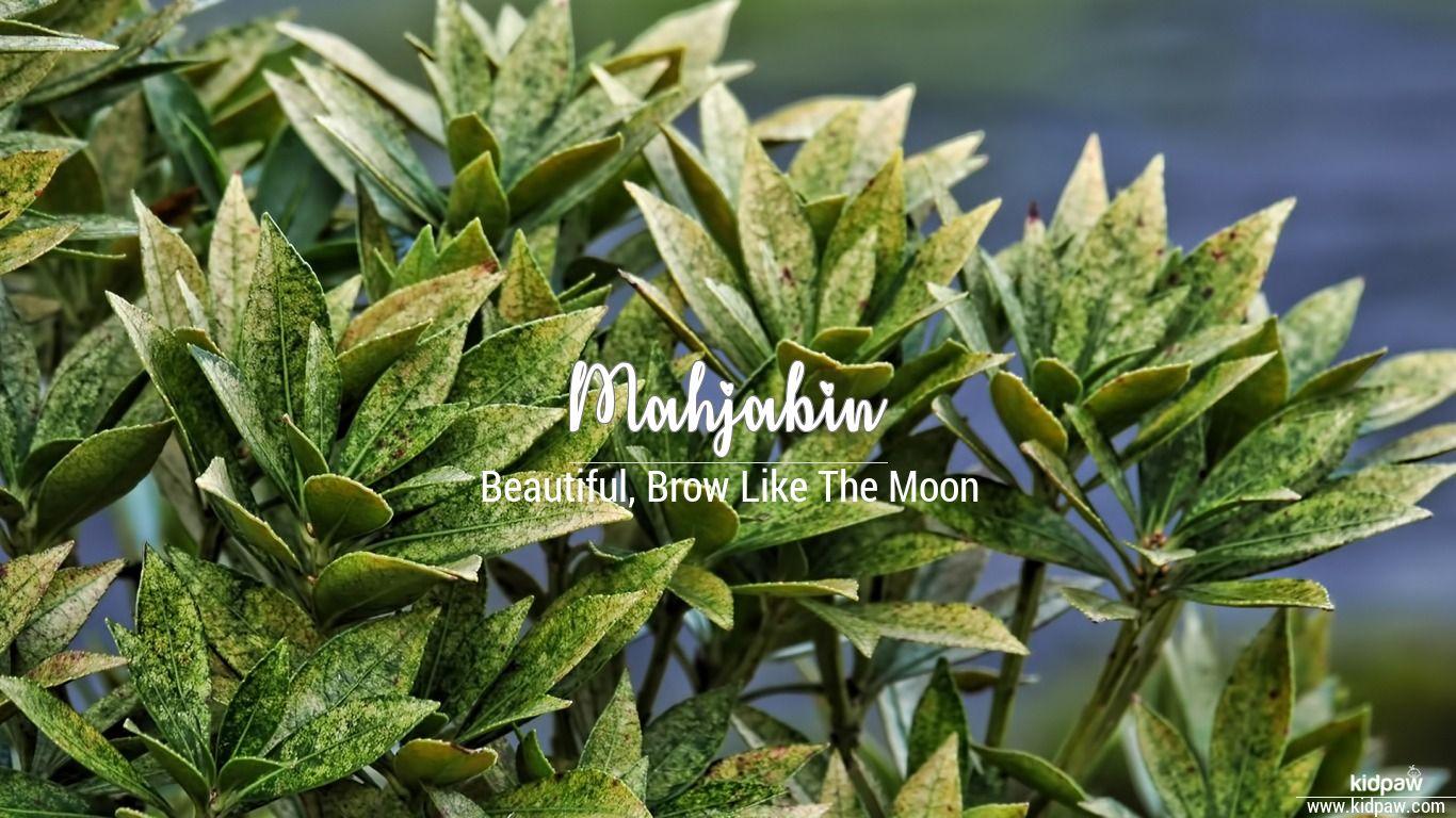 Mahjabin Name Meaning in Urdu, Arabic ...