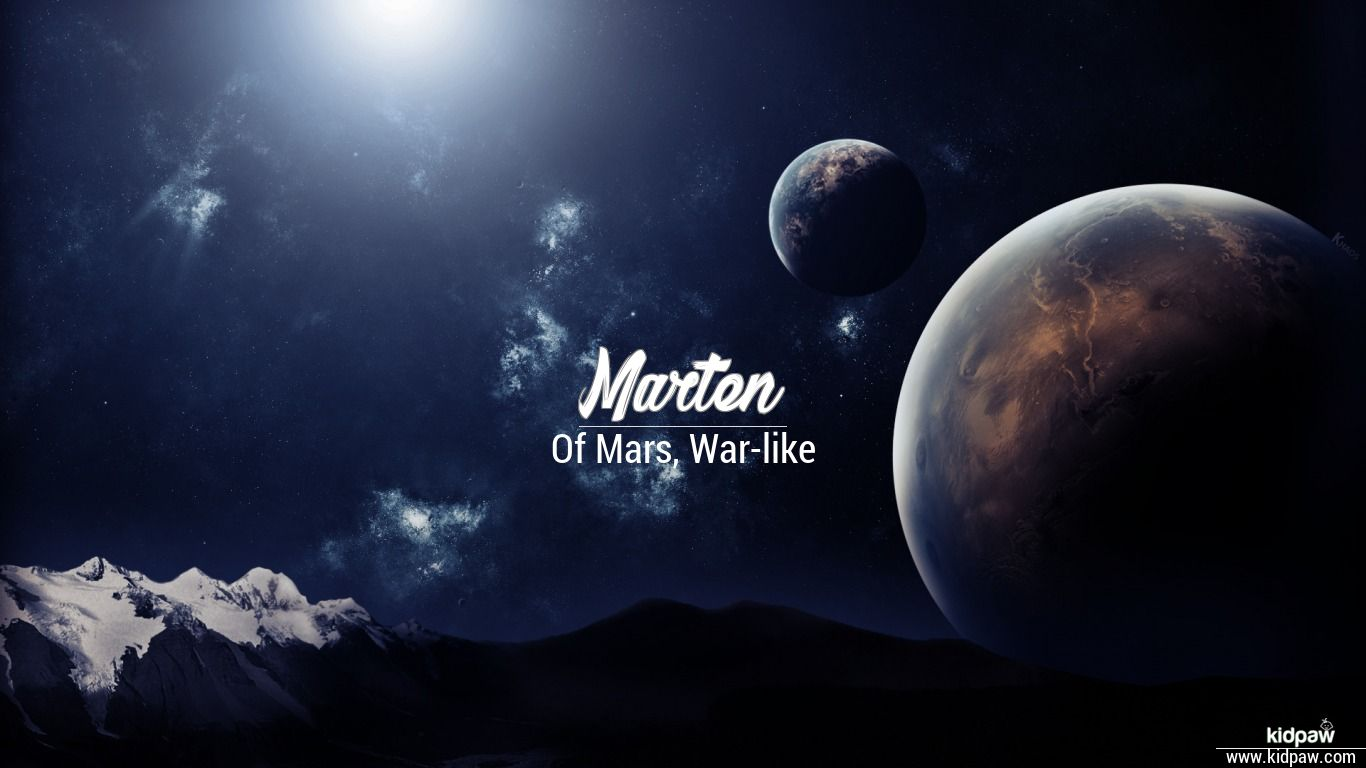 Marten beautiful wallper