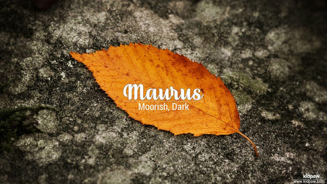 Maurus beautiful wallper