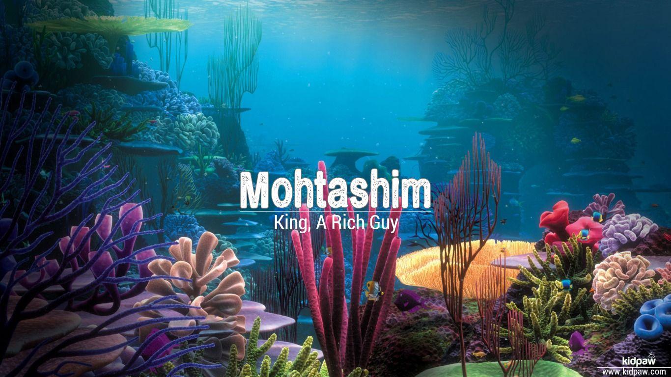 mohtashim name hd