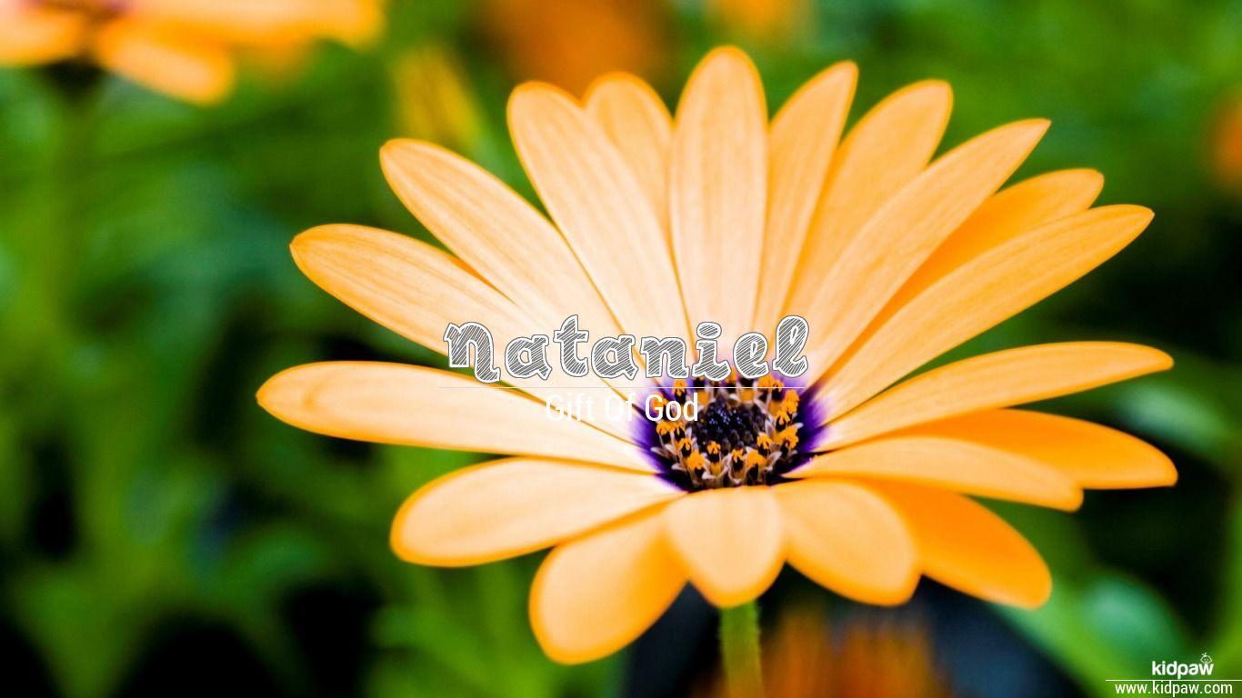 Nataniel beautiful wallper