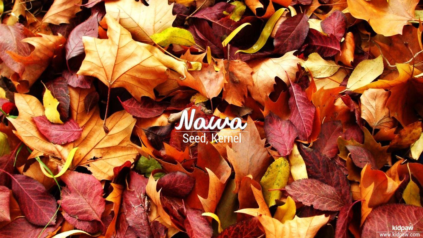 Nawa beautiful wallper