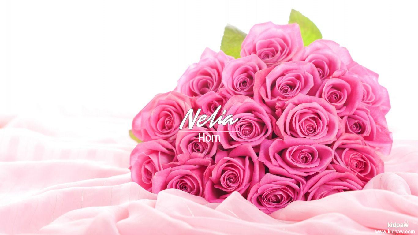 Nelia beautiful wallper