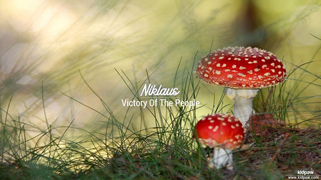 Niklaus beautiful wallper
