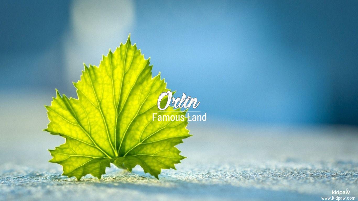 Orlin beautiful wallper