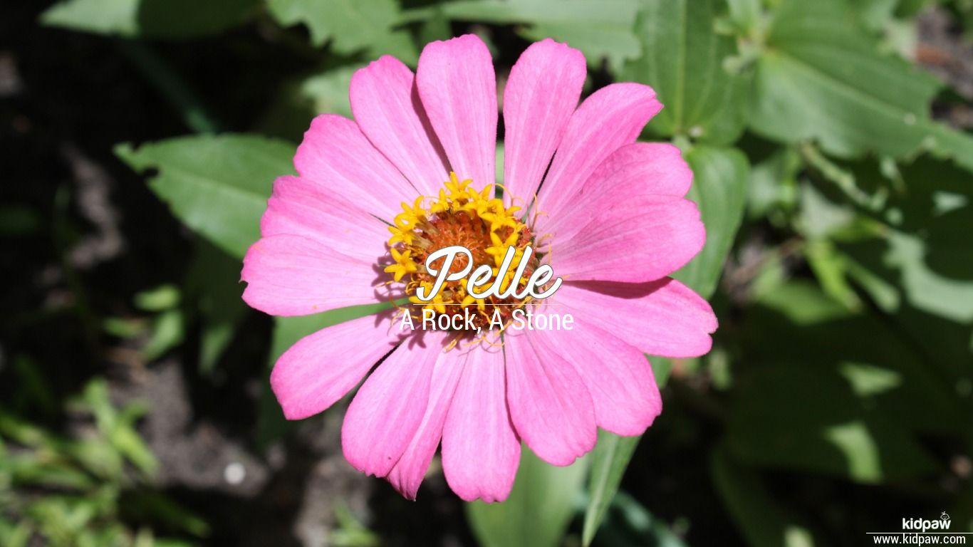 Pelle beautiful wallper