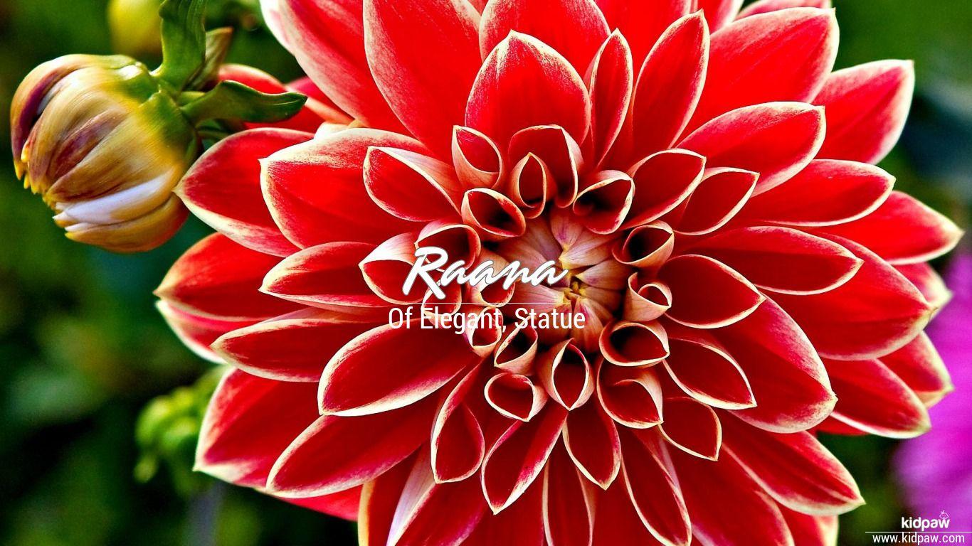 Raana Name Meanings In Urdu English Baby Names Meanings