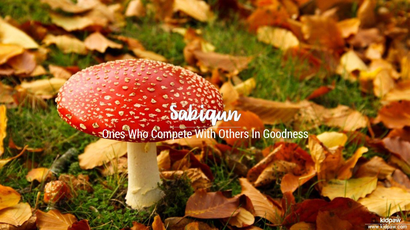 Sabiqun beautiful wallper