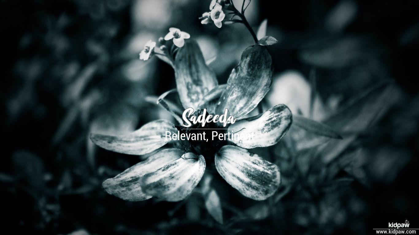 Sadeeda beautiful wallper