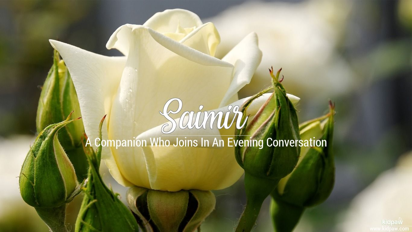 Saimir beautiful wallper