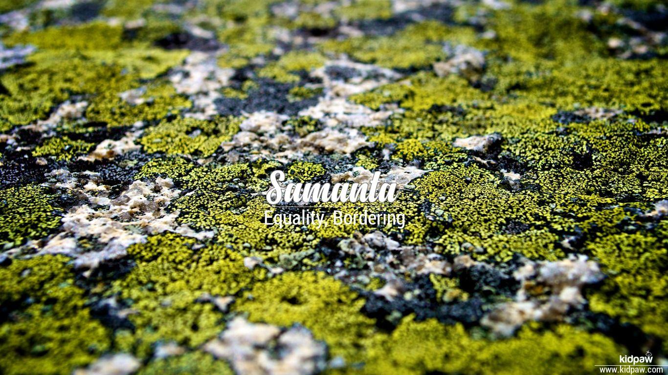 समानता, समान्था   Samanta Name Meaning in Hindi