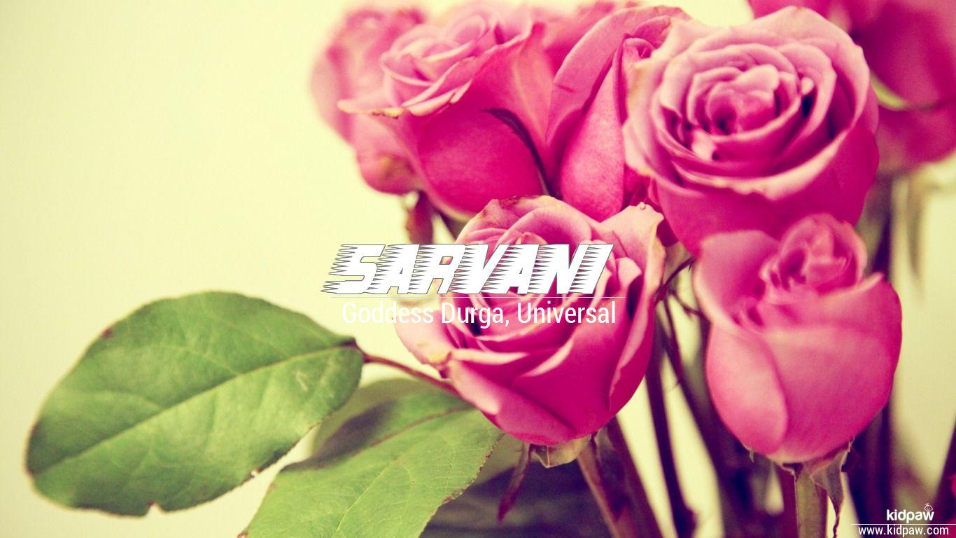 Sarvani beautiful wallper