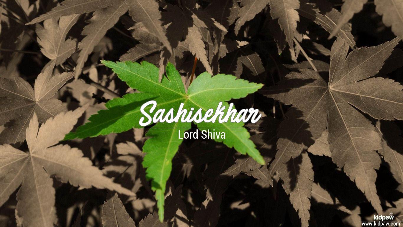 Sashisekhar beautiful wallper