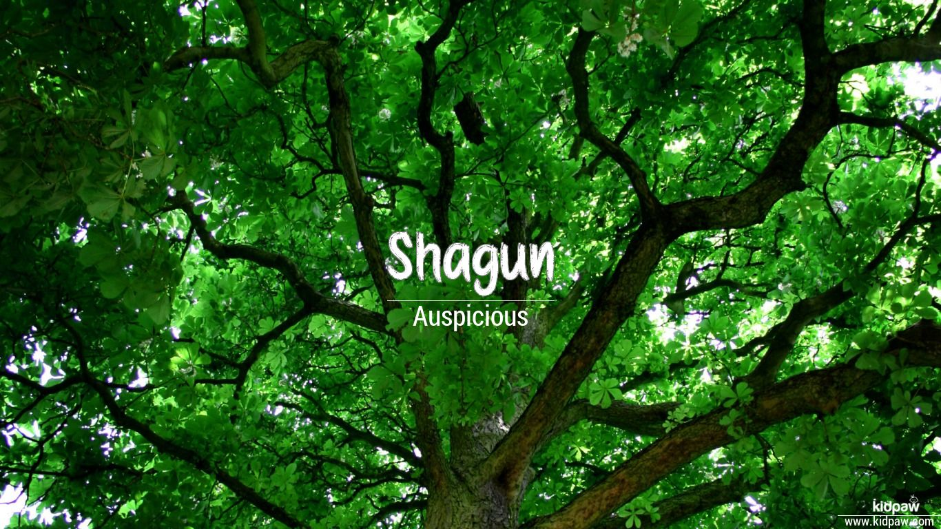 Shagun beautiful wallper