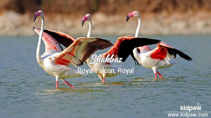 Shahbaz beautiful wallper