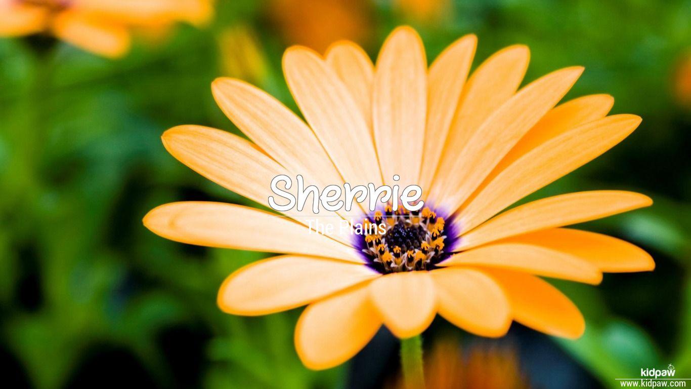 Sherrie beautiful wallper
